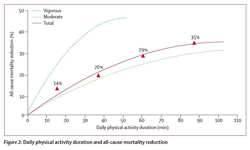 Activité physique quotidienne et mortalité toutes causes confondues